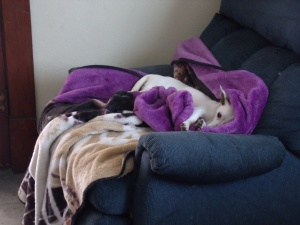 Jinx has a rough life here!  (Or not!)