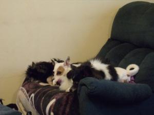 Boxita, Jinx and Chance at rest---finally!