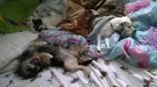 Boxi, Jinx and Chance know how to guard my bed!