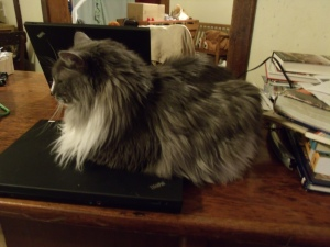 Jersey is the one who likes to use my laptop the most!