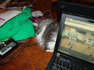 Jersey was guarding the space between laptops.  Sometimes mine moved when she stretched.