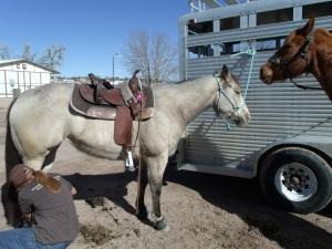 Shambo is a beautiful buckskin mare.